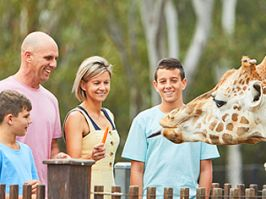 Feeding giraffes at Taronga Western Plains Zoo, Dubbo