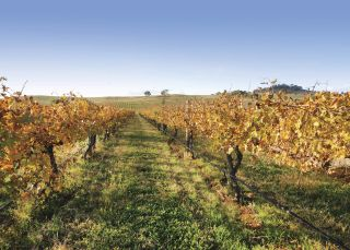 Mudgee Vineyard - Country NSW