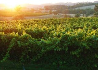 Tumbarumba Wine Region
