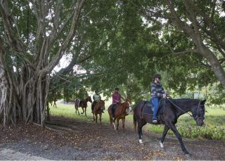Small group enjoying a guided tour with the Port Macquarie Horse Riding Centre
