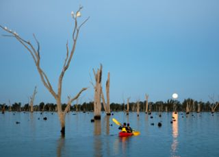 Kayak amongst red gums on Lake Mulwala