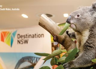 Close up with the Koala - Sydney - Destination NSW