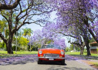 Vintage car passing through a jacaranda-lined street in Grafton - Clarence Valley