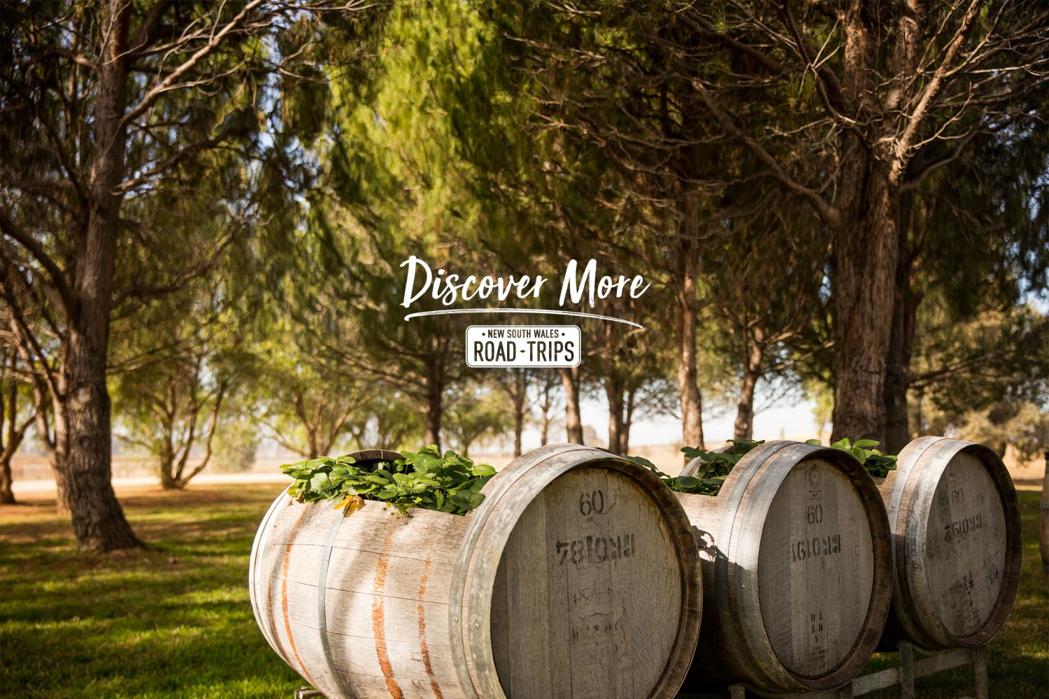 Barrel gardens at Lowe Wines in Mudgee
