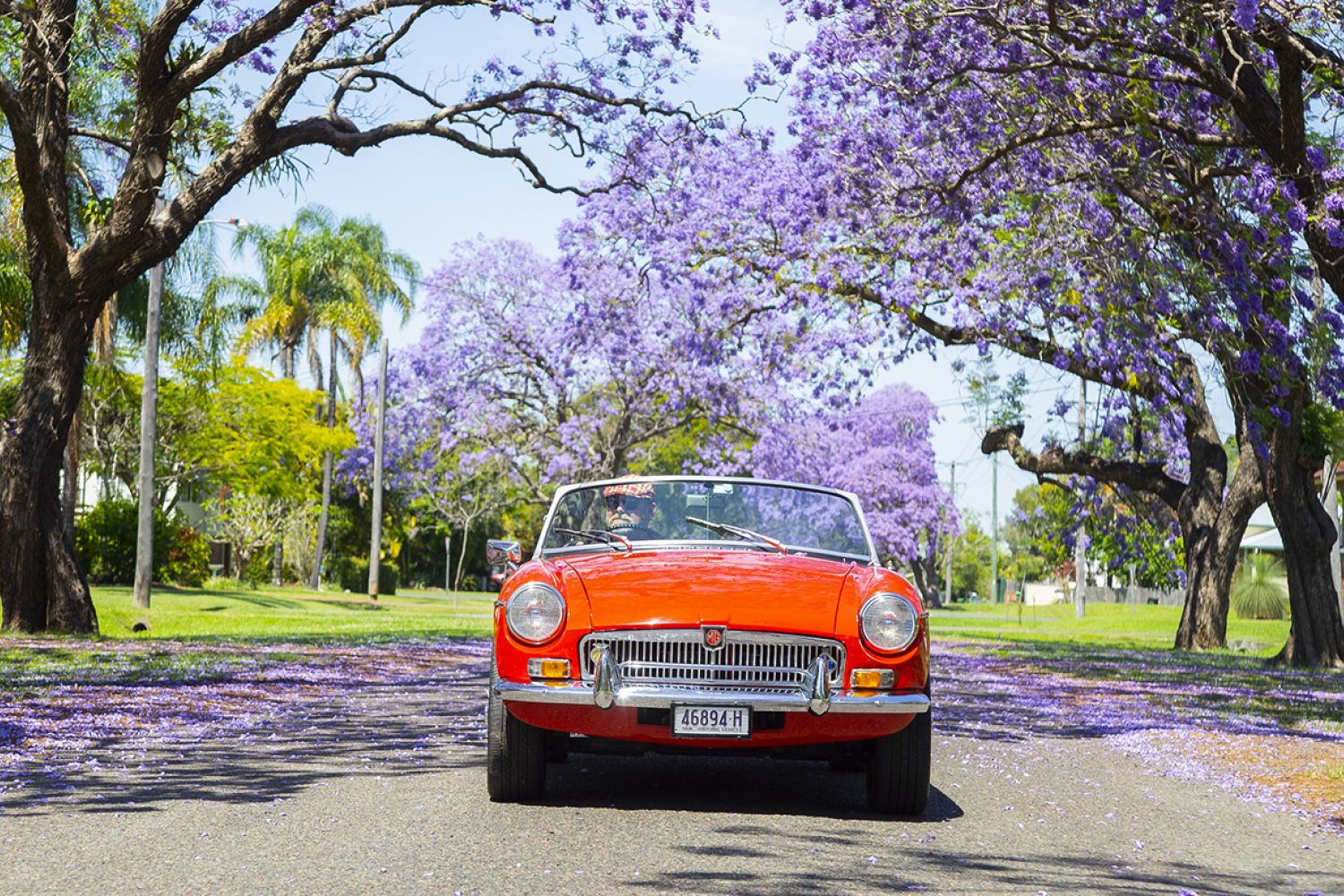 Vintage car passing through a jacaranda-lined street in Grafton, Clarence Valley