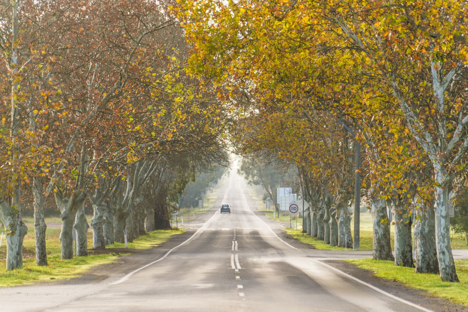 Autumn colours on display on a tree-lined road in Narrandera