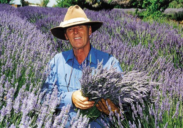 Lavender farm near Orange, Country NSW
