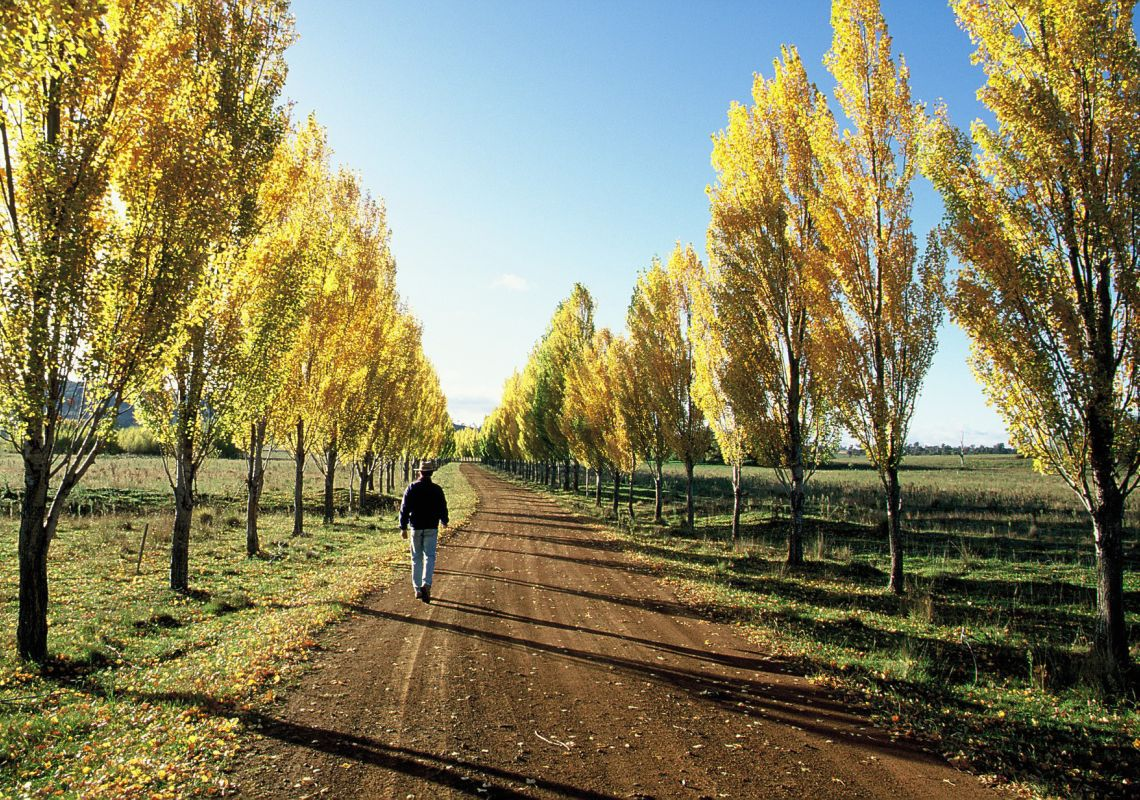 Tree-lined dirt road in the countryside - Glen Innes