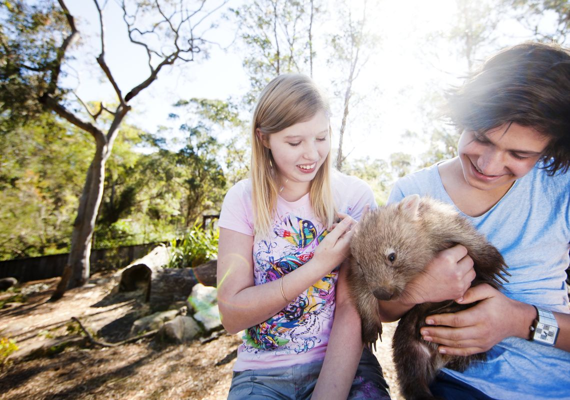 Young boy and girl handling a wombat at the Australian Reptile Park in Gosford