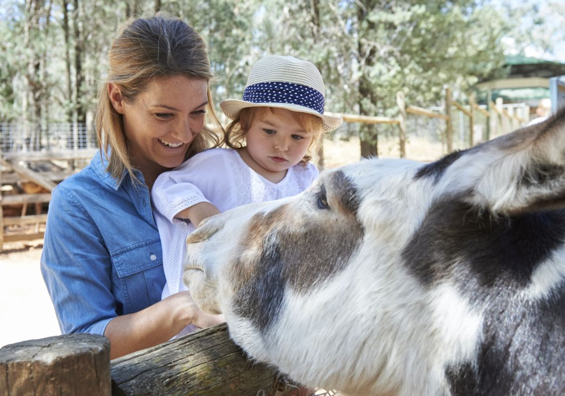 A mother and daughter petting a donkey, Wagga Wagga Botanic Gardens zoo