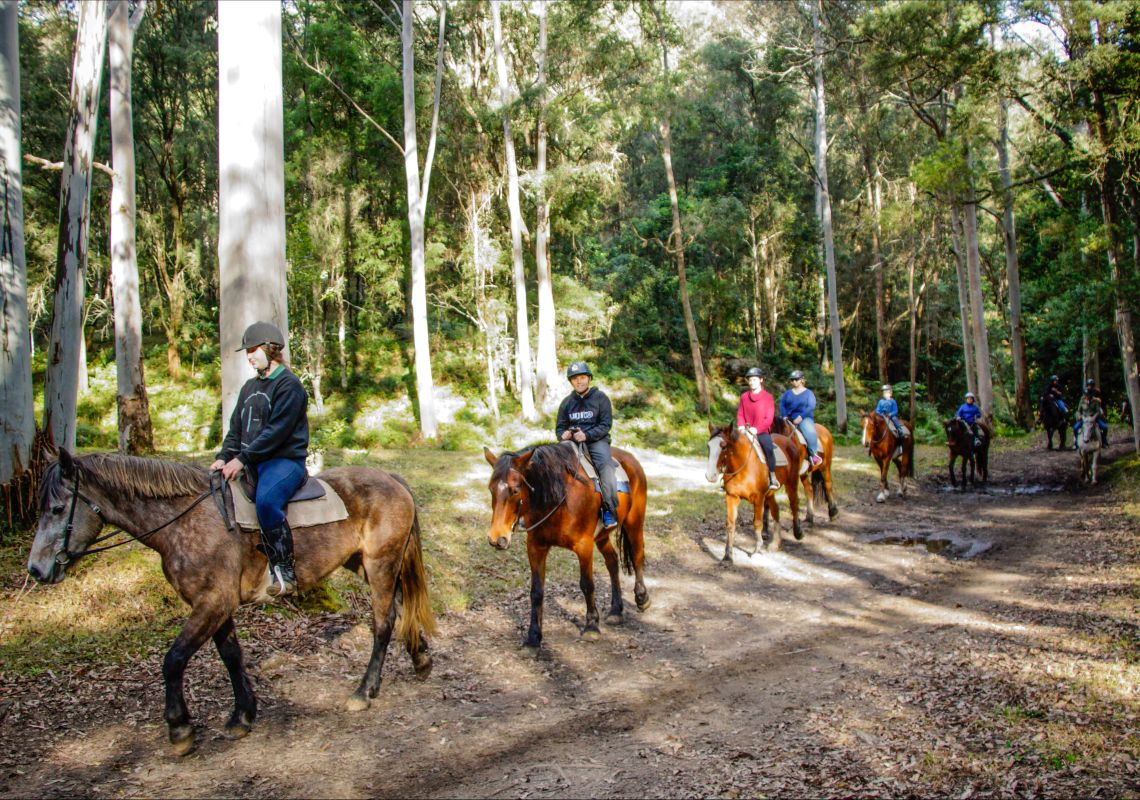 Glenworth Valley - Horse Riding Trail - Central Coast