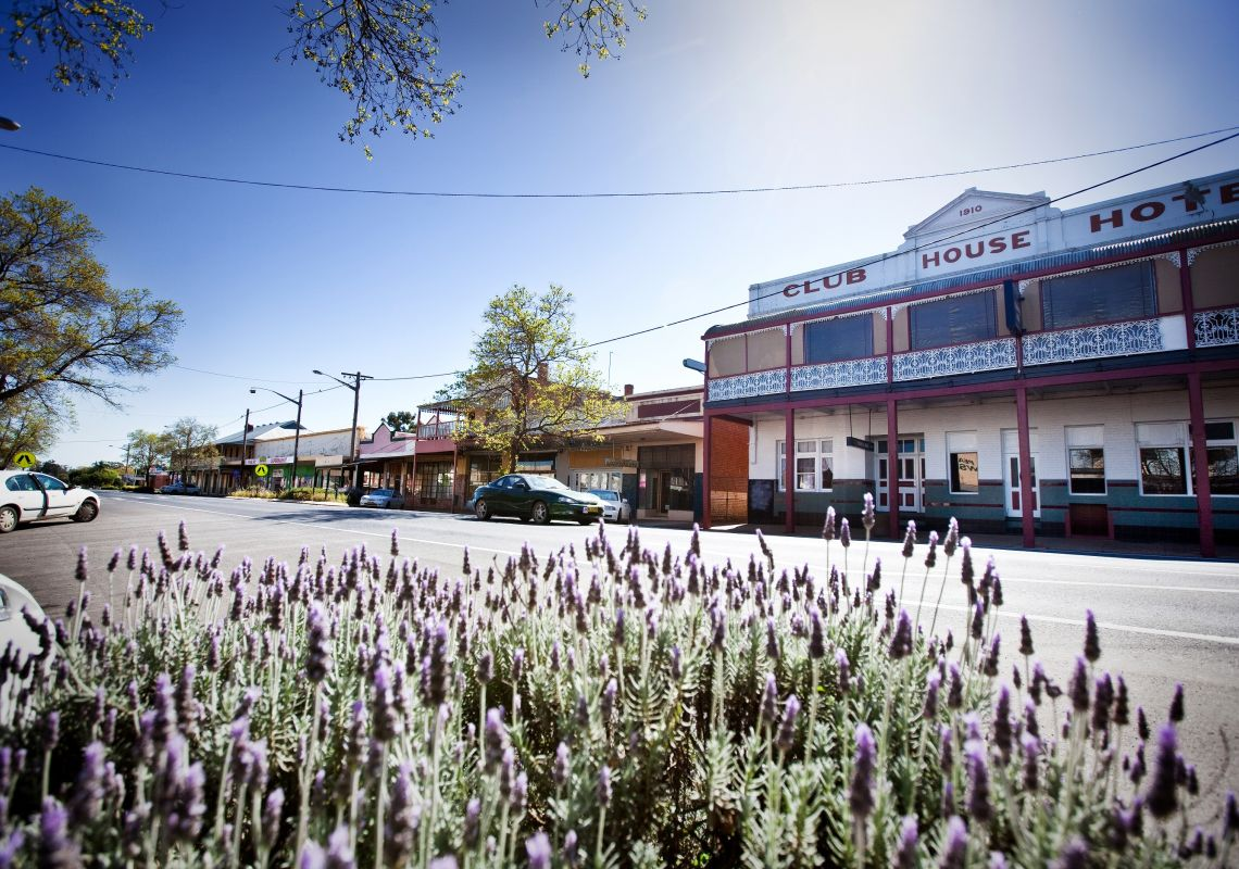 Lavender growing on Caswell Street in Peak Hill, near Parkes