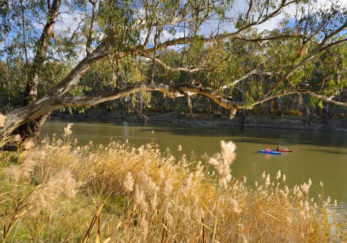 Two kayakers paddling on the Murrumbidgee River, Narrandera, NSW