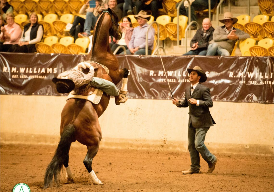 Dan Steers - Australian Stock Horse Society, Tamworth
