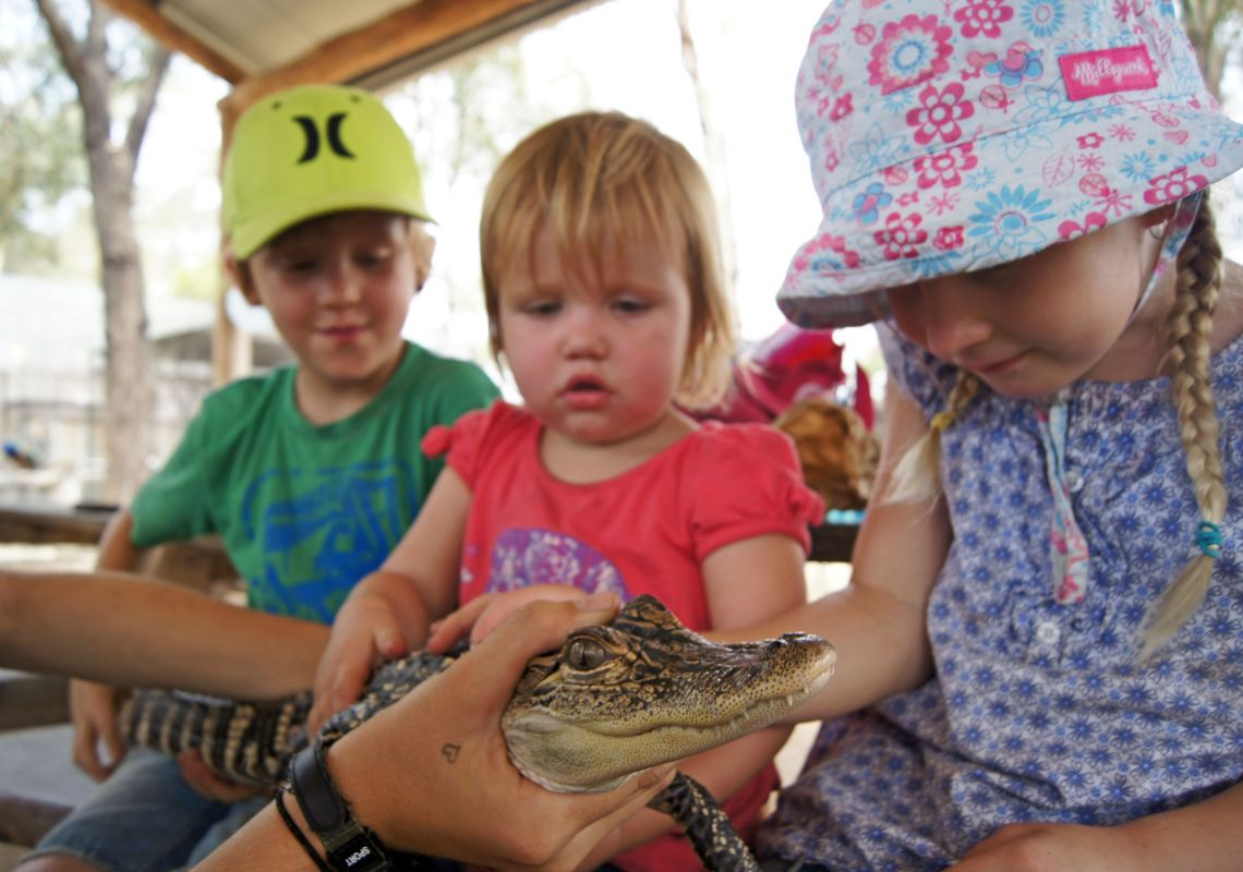 Kids meet an alligator at Hunter Valley Zoo, Cessnock