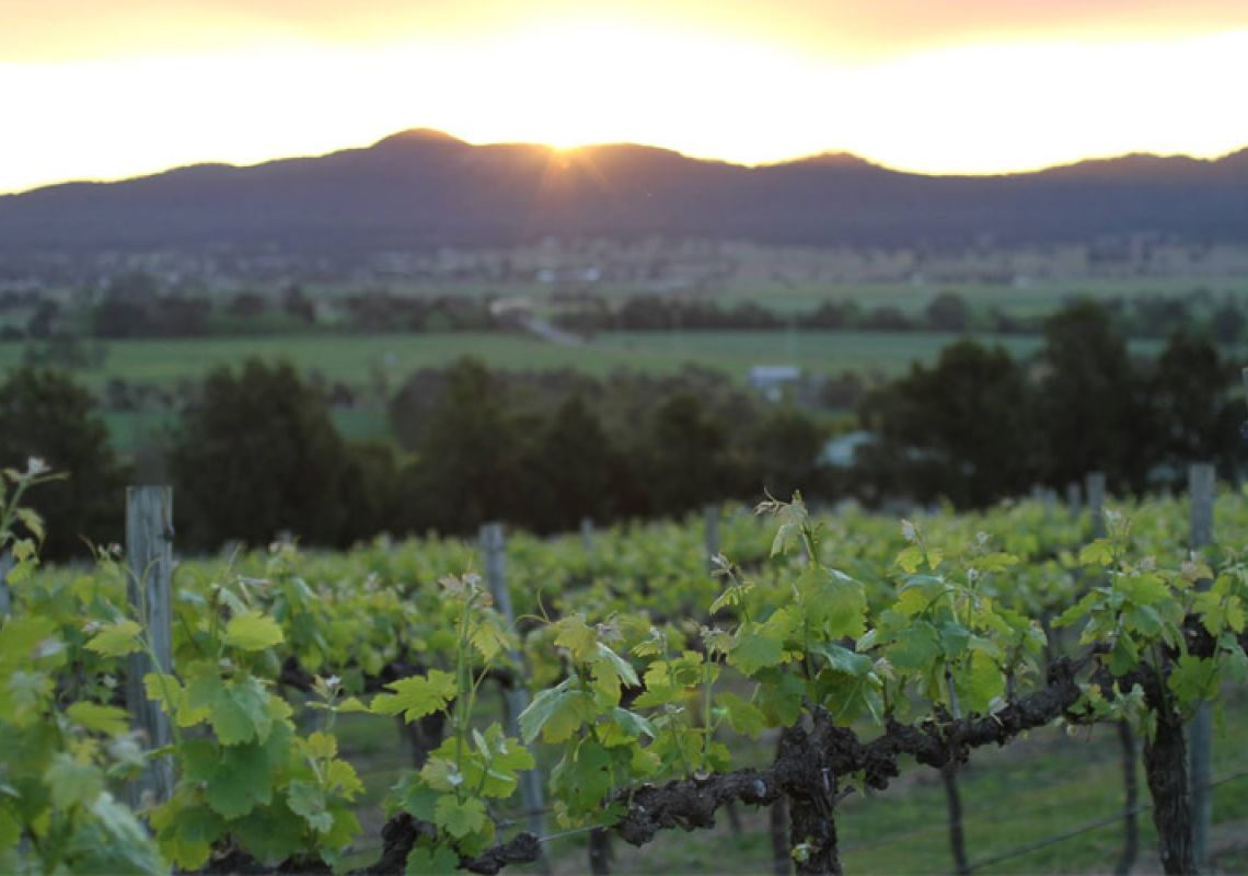 Sunset at Small Forest Wines vineyard in Denman - Upper Hunter