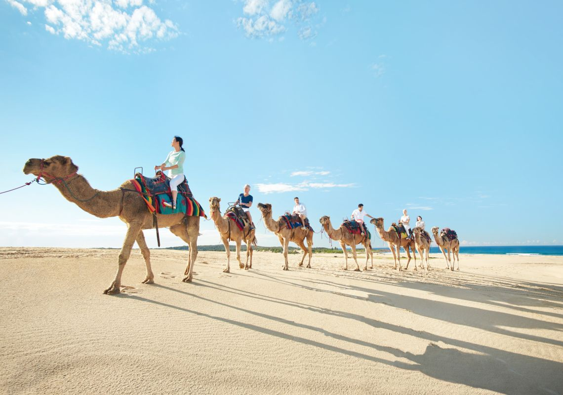 Worimi Conservation Lands, Camel Riding in Port Stephens