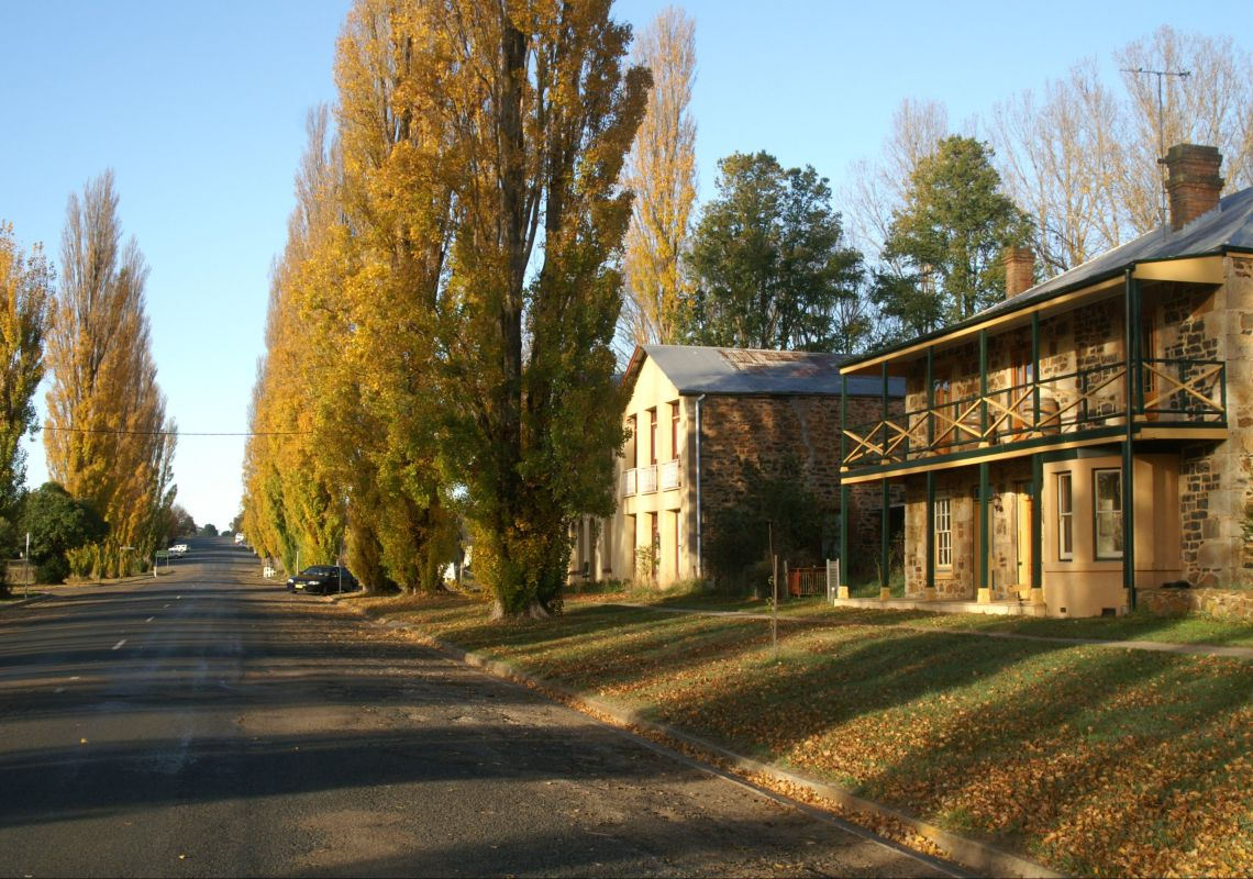 Jacarandas lining a street with stone houses in Taralga, NSW