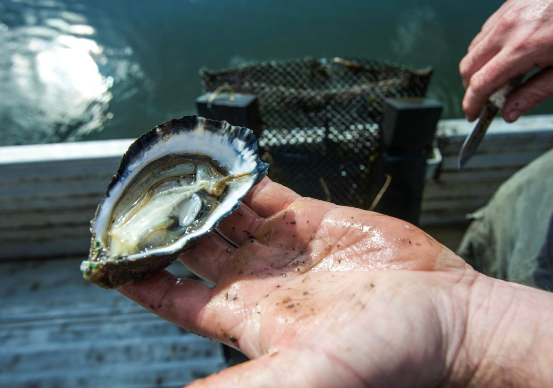 Oyster Farming on Batemans Bay