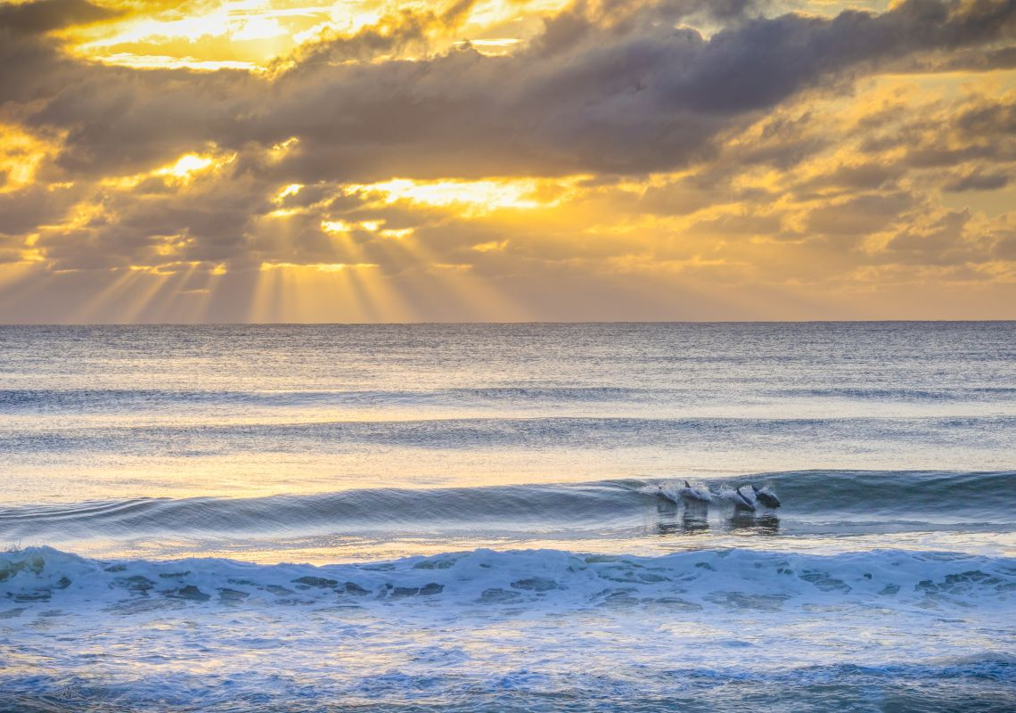 Dolphins in the surf at Seven Mile Beach, on the NSW South Coast