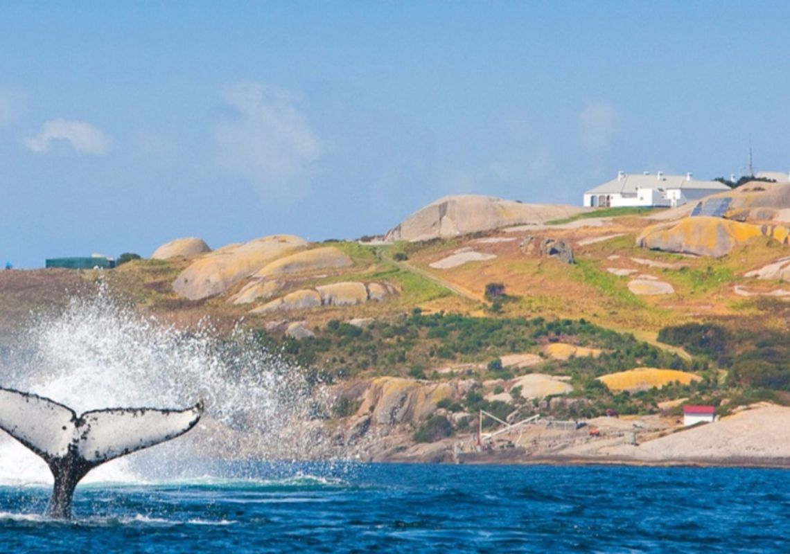 Whale Watching - view of Montague Island - off Narooma - South Coast