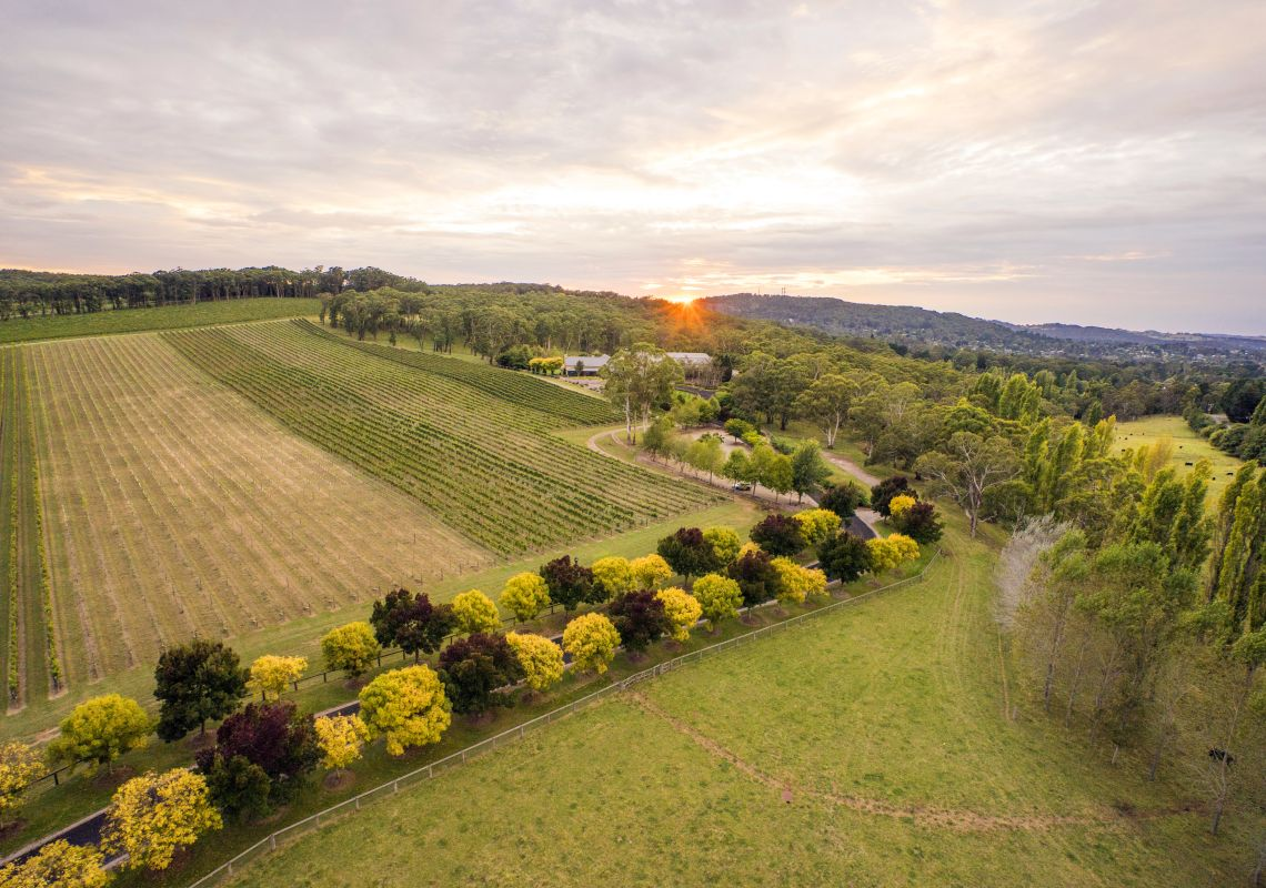 Sun rising over Centennial Vineyards, Bowral