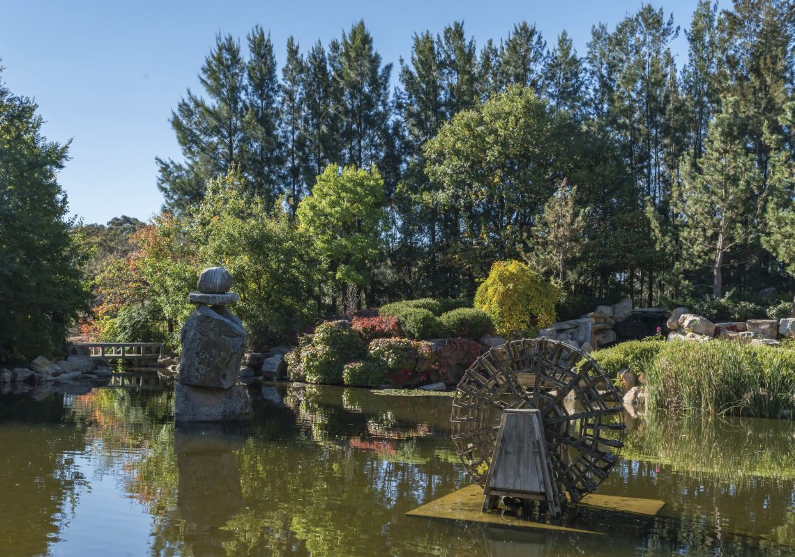 The Pool of Tranquility in Lambing Flat Chinese Tribute Garden, Young