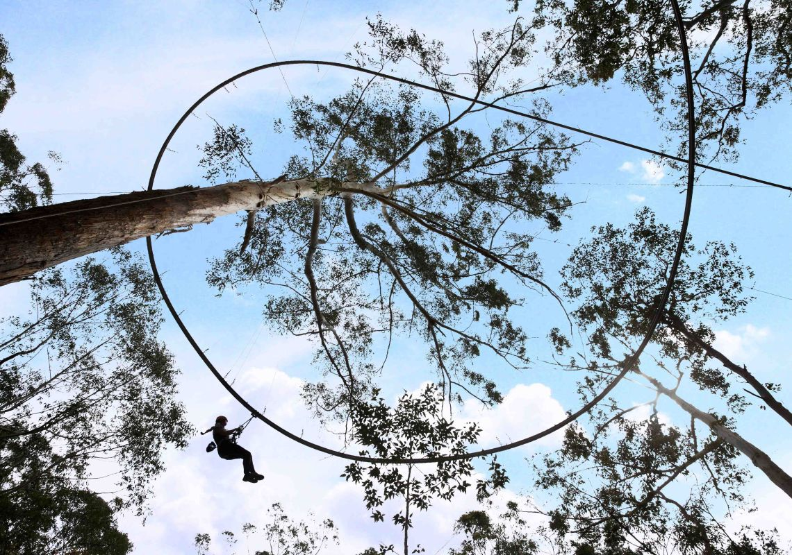 Treetop Crazy Rider at Treetop Adventure Park in Tuggerah, Central Coast
