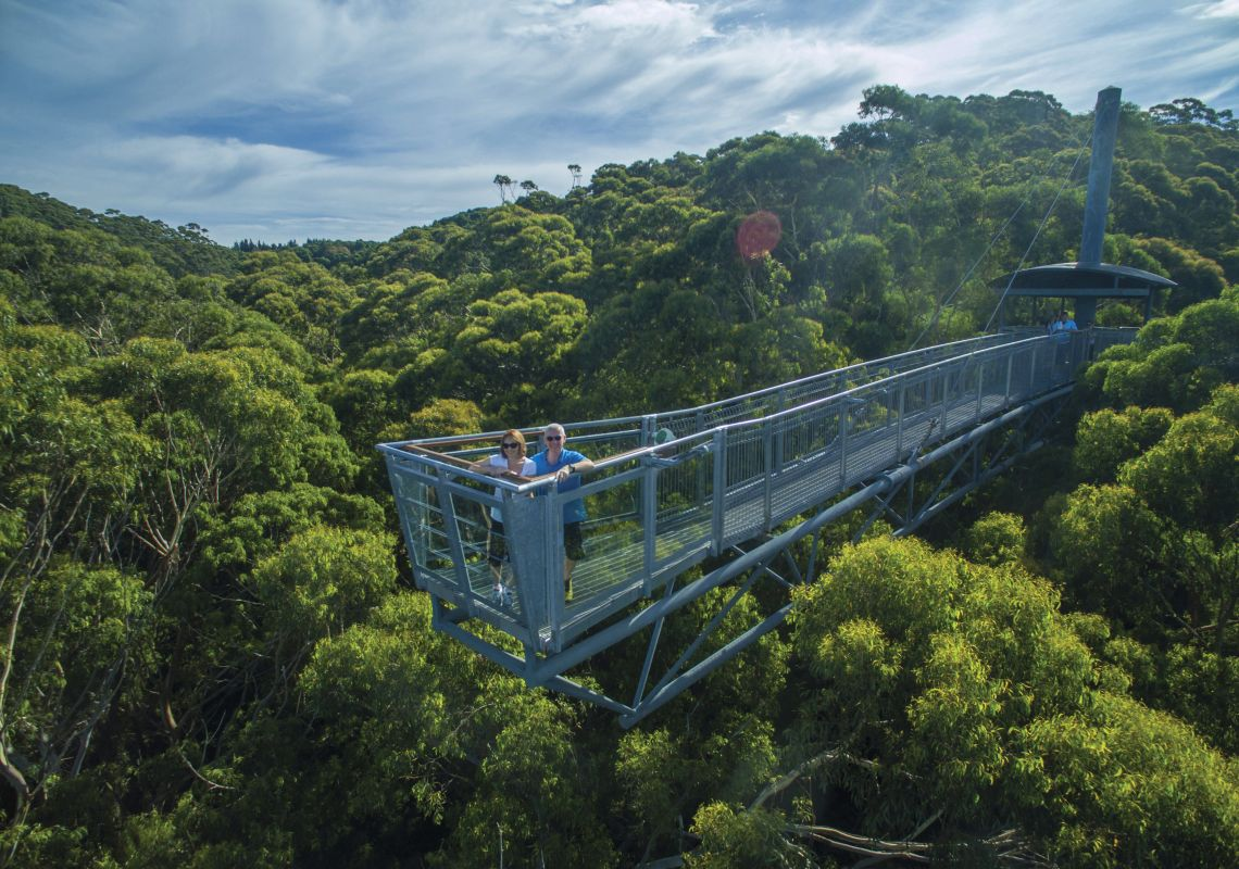 Couple enjoying the views from up high at Illawarra Fly Treetop Walk, Knights Hill.