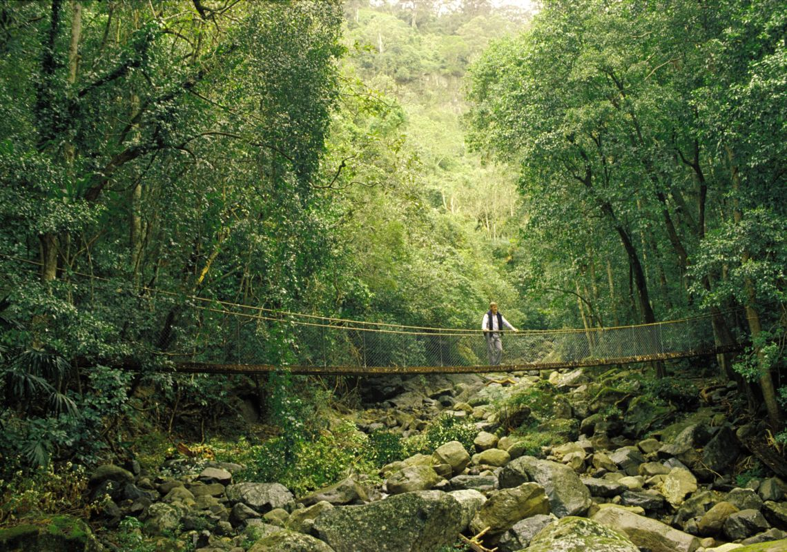 Man on suspension Bridge in Minnamurra Rainforest, NSW South Coast