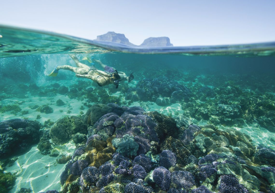 Couple snorkelling off Lord Howe Island