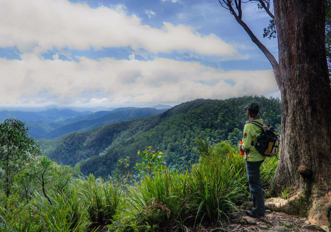 Views from Gloucester Falls Track in Barrington Tops National Park