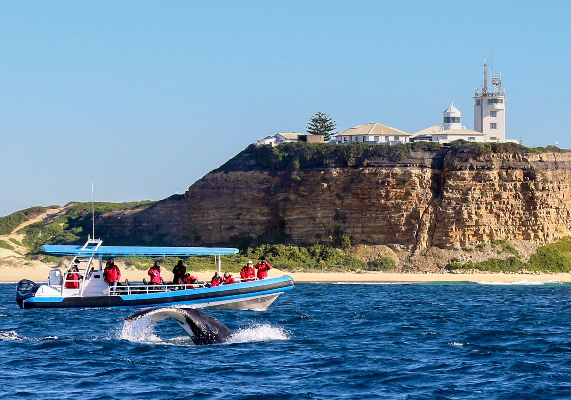 Humpback whale encounter with CoastXP near Nobbys Lighthouse, Newcastle, Australia