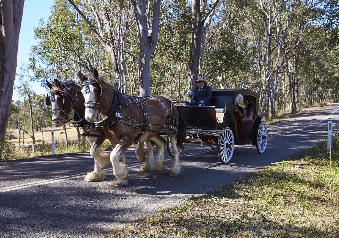 Horse Drawn Carriage experience in the Hunter Valley