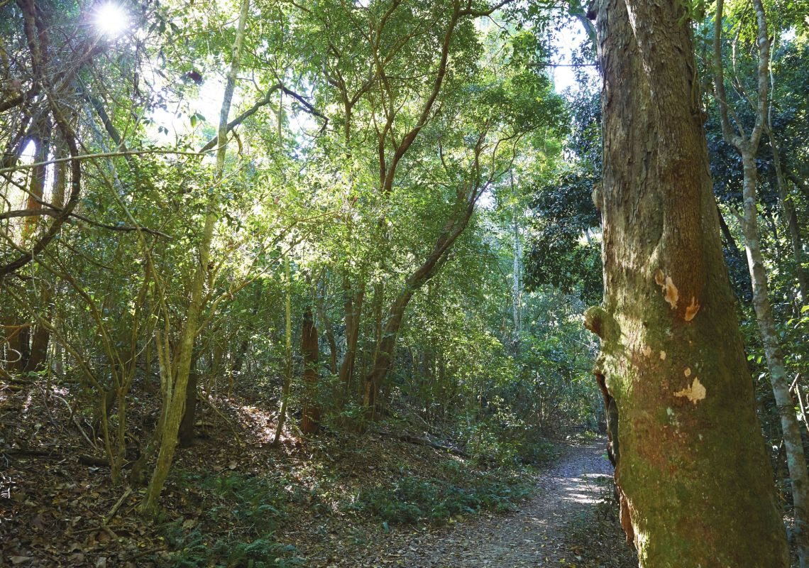A rainforest walking track in the World Heritage-listed Iluka Nature Reserve, NSW