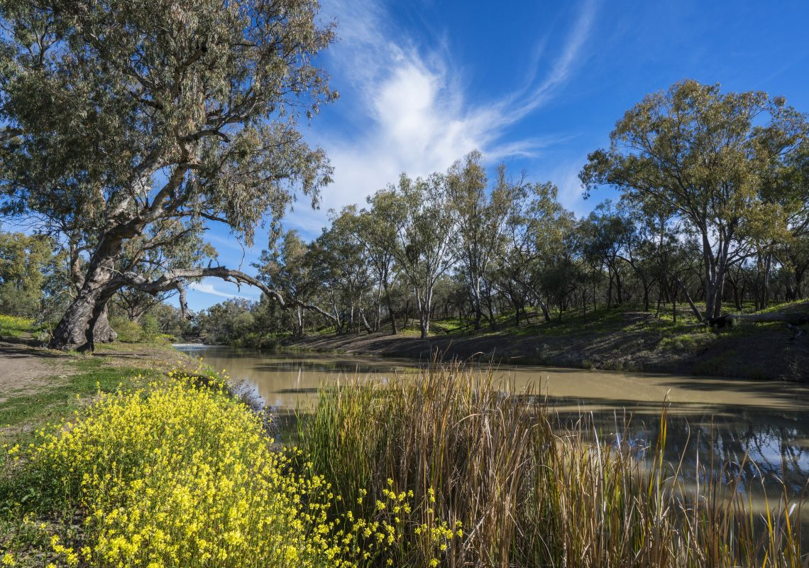 Trees and wildflowers surround the banks of the scenic Namoi River in Walgett