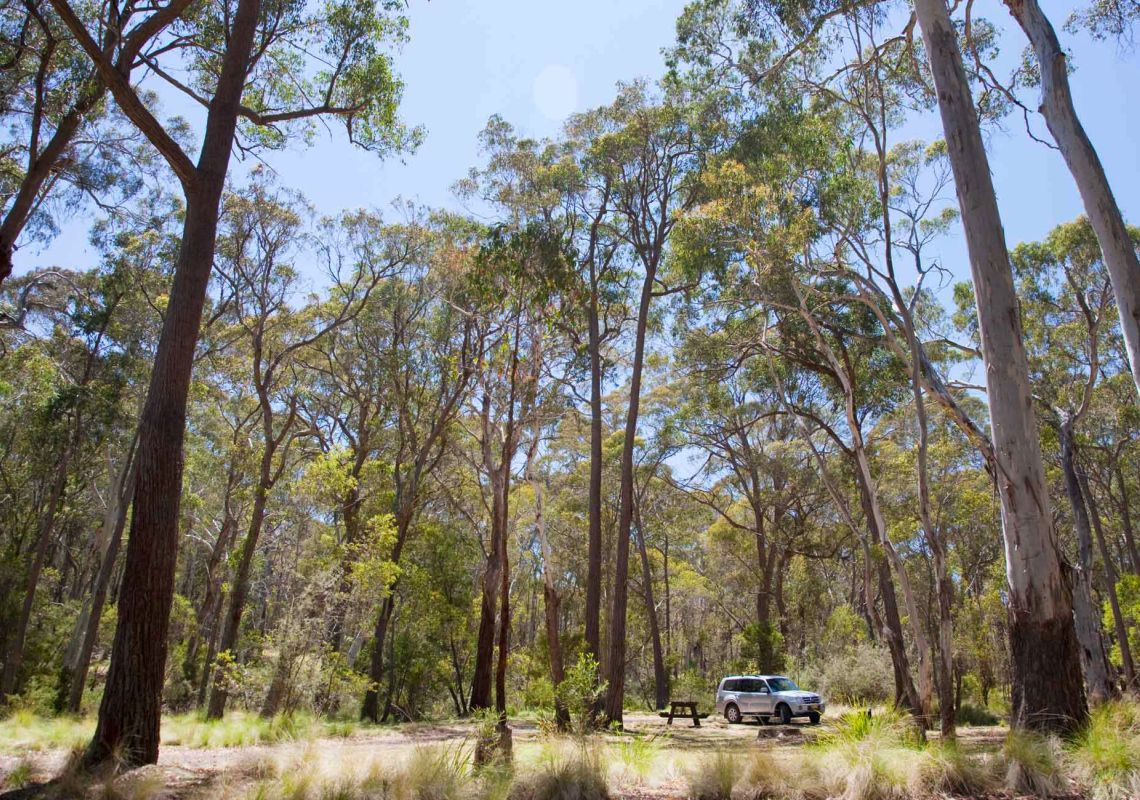 4WD parked among tall eucalypts, Coxs Creek campground, Coolah Tops