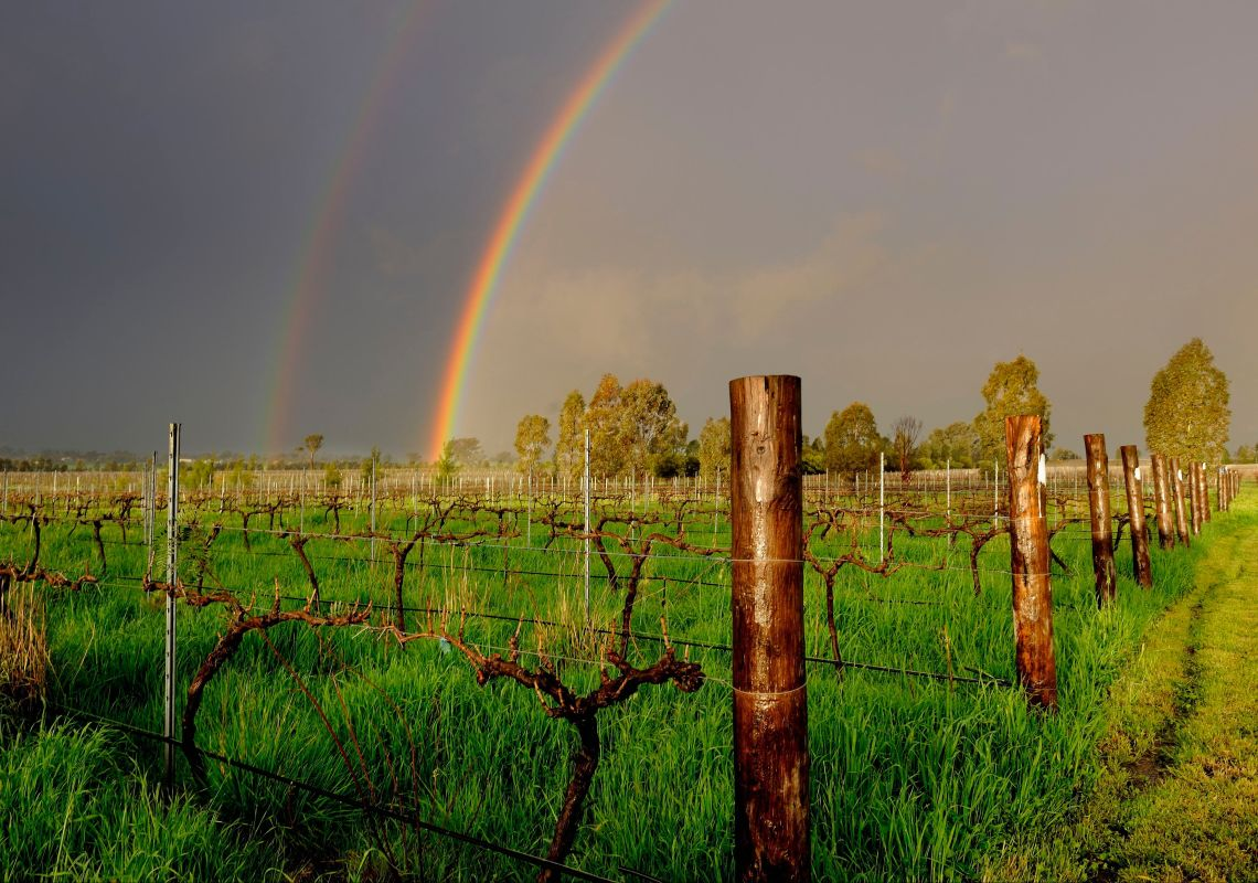 Rainbow over the Rosnay Organic Farm and Vineyard at Canowindra