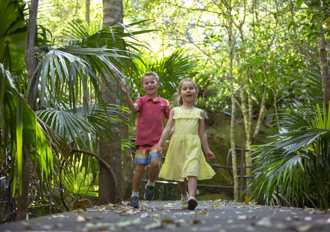 Children exploring the Minnamurra Rainforest in Kiama, South Coast