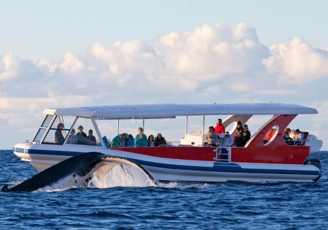 Whale watching tour in Shoalhaven, South Coast