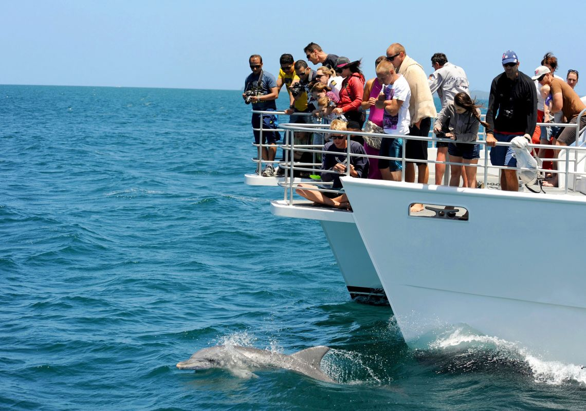 Dolphin watching with Jervis Bay Wild Whale Watching & Dolphin Cruises, Jervis Bay