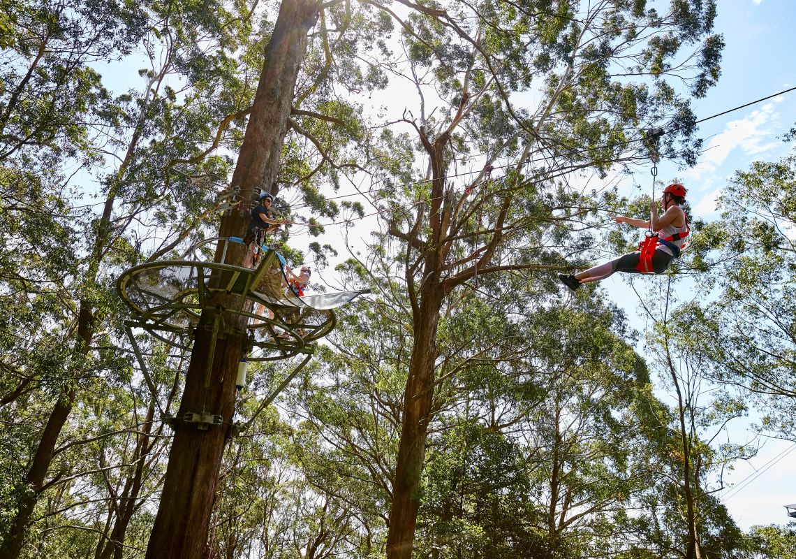Visitors enjoying the Illawarra Fly Zipline Tour in Knights Hill, south of Wollongong