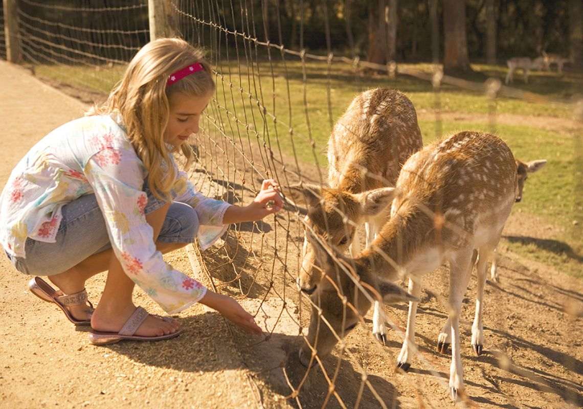 Young girl feeding the deer's behind the enclosure, Mogo Zoo, Mogo, South Coast