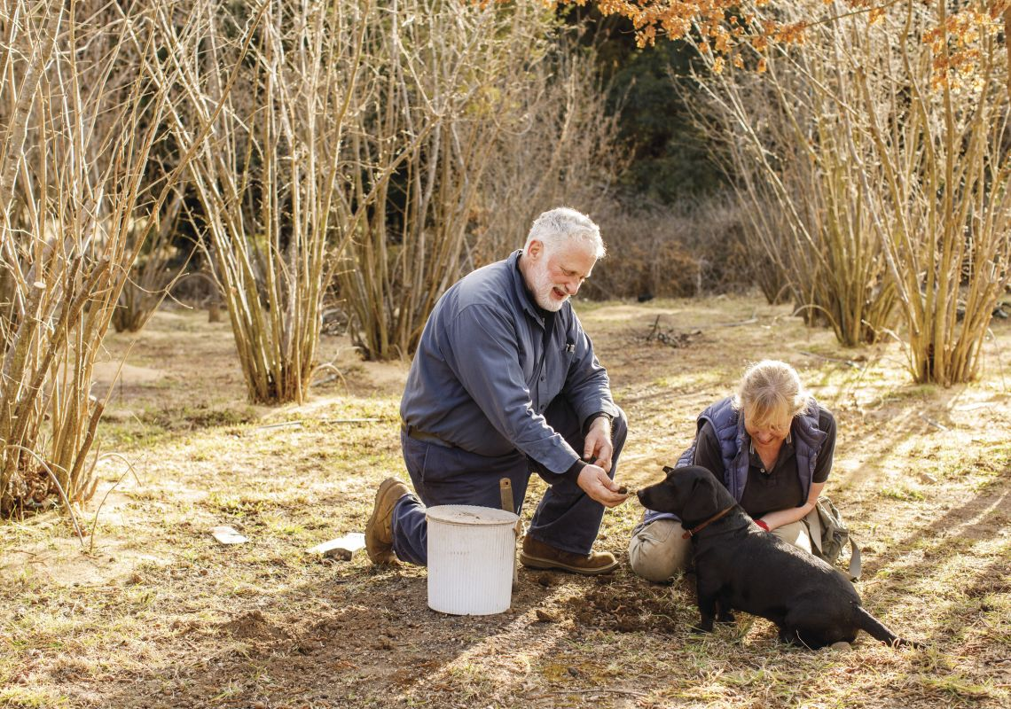 Owners Peter and Kate Marshall searching for truffles with their dog at Terra Preta Truffles, Braidwood