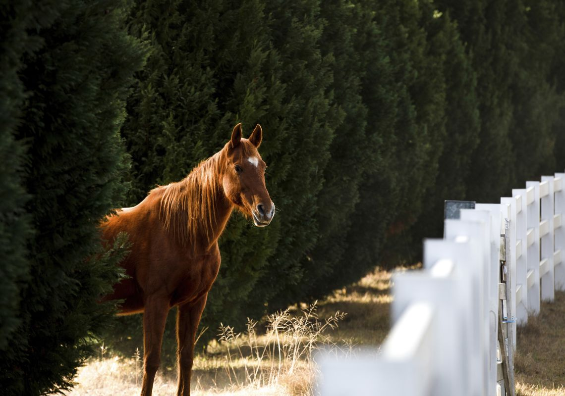 Horse on a property in Wollombi in Hunter Valley, Hunter region