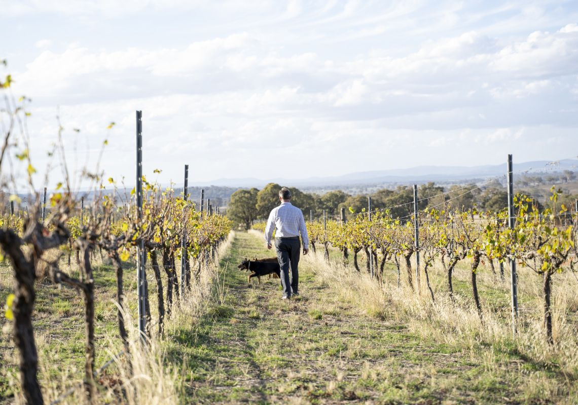 Winemaker Shaun Cassidy and his wine dogs at the Merilba Estate Wine property in Uralla