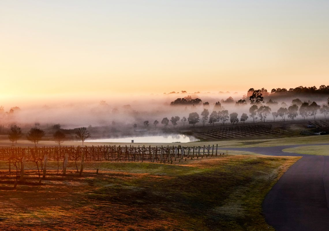 Foggy early morning at a winery in Hunter Valley, Hunter