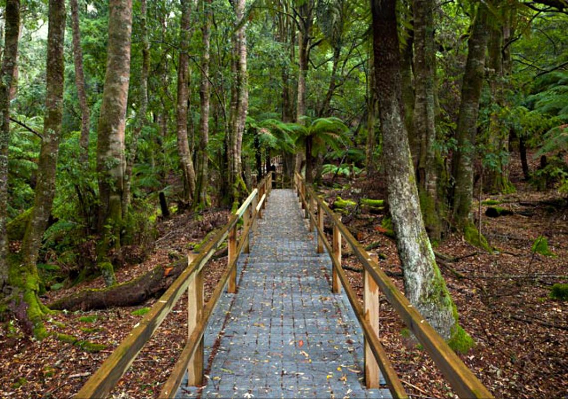 Penance Grove walking track boardwalk, Monga National Park at Queanbeyan, Country