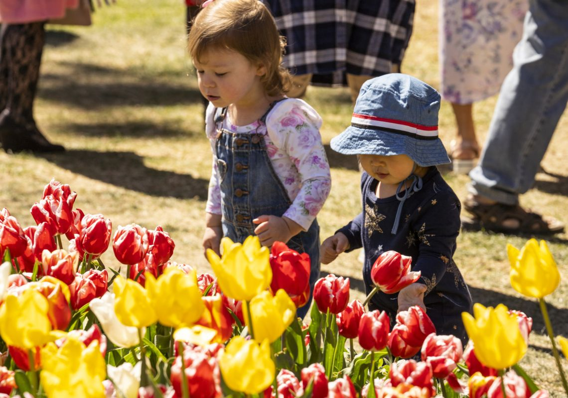 Children viewing the tulips in full bloom and colour at the annual Tulip Time Festival at Corbett Gardens in Bowral, Southern Highlands