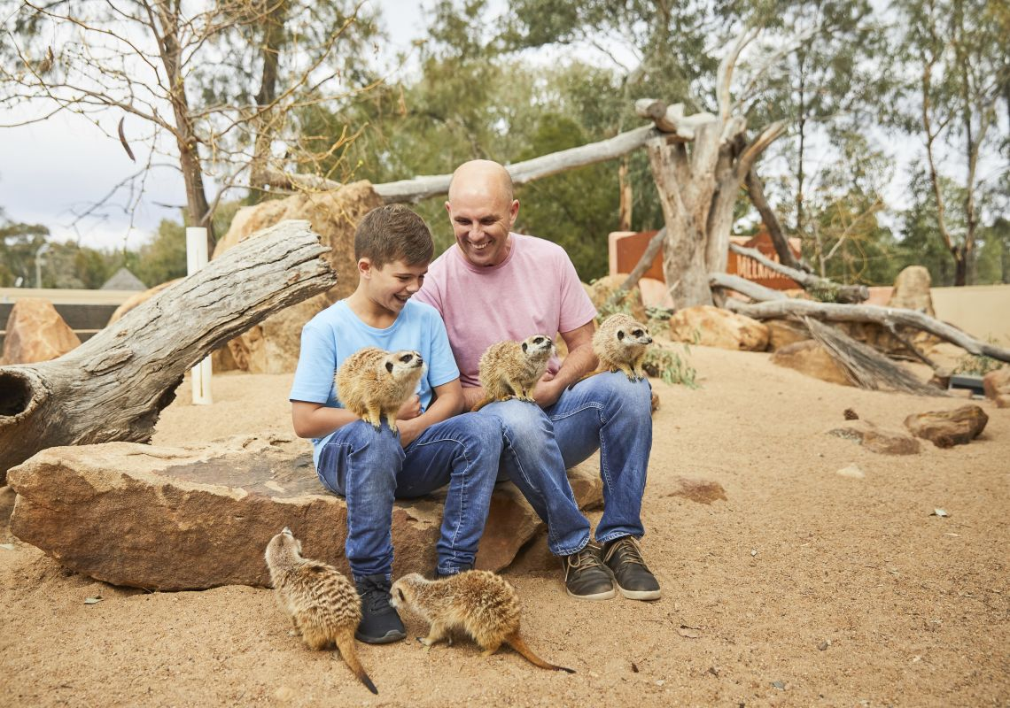 Father and son enjoying a meerkat encounter at Taronga Western Plains Zoo, Dubbo